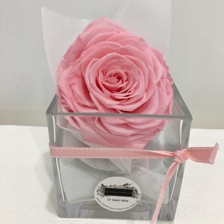 Infinity Rose (Preserved Rose)